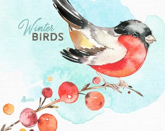 Winter Birds. Watercolor holiday clipart, bullfinch, rowan, Christmas, cards, conifers, handpainted, floral, invite, country, wild, red