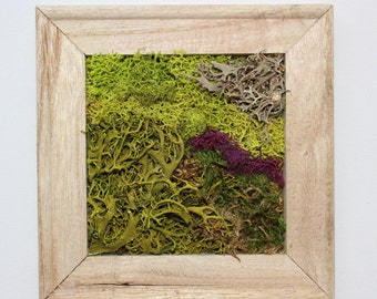 Moss wall art by Botanical Wall Designs - handmade and original. Nature in your home.
