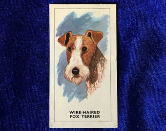 1967 Wire Fox Terrier Dog Art Bishops Stortford Dairy Farmers Card U.K. Mother's Day!