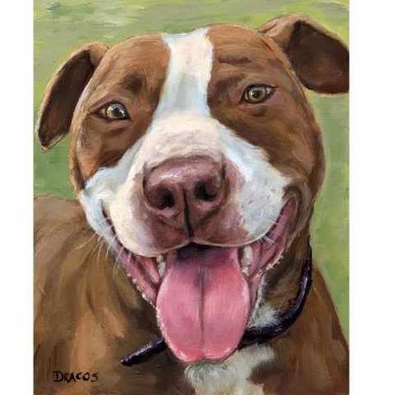 Pit Bull Art Print Of Original Painting Red Nose With White