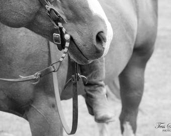 Equine Photography, Horse Photography, Quarter Horse, Farm Art, Western Photography, Black and White Photography, Equestrian Art, Horses