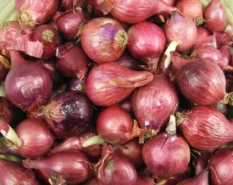 Red Onion Sets Organic | Red Baron Onion Sets 4 Pounds Spring Shipping