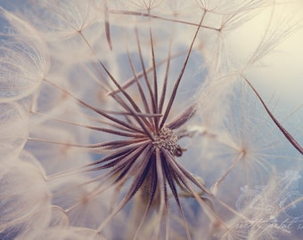 Fine Art Photo, Dandelion Photo, Flowers Art, Dreamy, Dandelion Art, Wish, Light Blue, Nursery Art, Macro Photo, Floral Decor, Whimsical Art