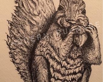 "Plastic Acorns 13""x16"" Squirrel Ink Sketch: Framed Original"
