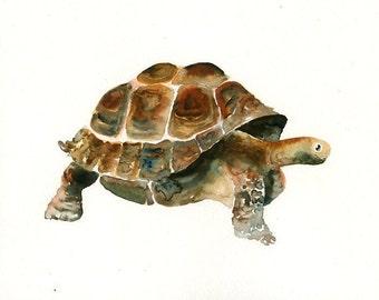 GALAPAGOS tortoise 10x8inch print-Children's Decor-Art for Children-kids wall art-Nursery art -Animal lover