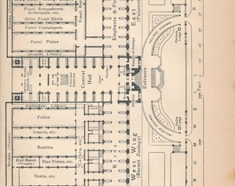 1922 Natural History Museum London England Antique Floor Plan