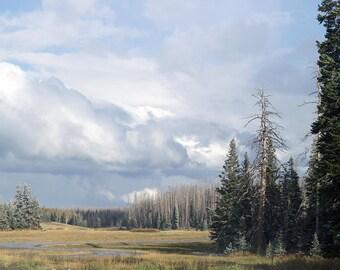 Utah photo canvas, Utah snowy trees print, Utah trees canvas, Utah trees photo, nature landscape canvas, oversized art, large canvas