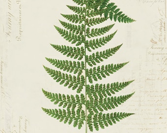Vintage Fern on French Ephemera Print 8x10 P160
