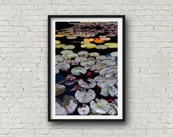 flower photography,Lotus flower,flower art,flower prints,printable art,digital download,lotus art,home decor,lotus print,pink lotus