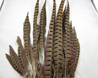 Complete Ring Neck Pheasant tail Feathers rpct-00 craft supplies