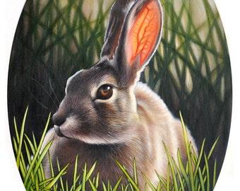 8 x 10 Fine Art Giclee Print - 'Just a Rabbit'