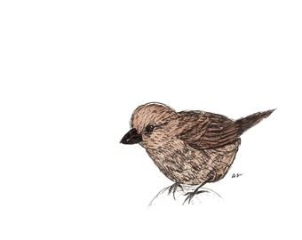 Brown Bird – Greeting Card