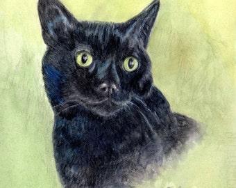 Black Cat Art, Black Cat Portrait, Black Cat Print, Cat Art, Cat Art Print, Black Cat Watercolor and Colored Pencil Painting by P. Tarlow