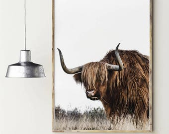 Highland cattle. Long hair cow. Highland bull. Animal poster. Nature photography. Instant download