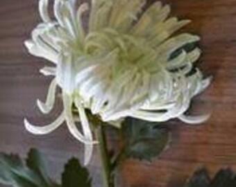 """30"""" Jumbo Fuji Mum Spray Real Touch Flower (white) - SB117WH"""