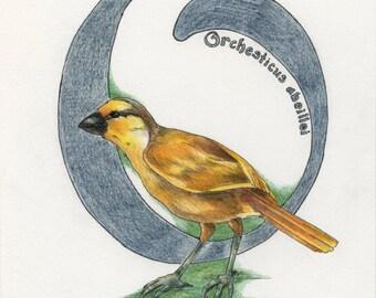 Avian Alphabet O