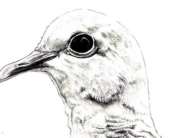 "Dove Print:  digital print of an original drawing available 5x7"" or 8x10"""