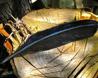 Raven feather magnet,  Made To Order