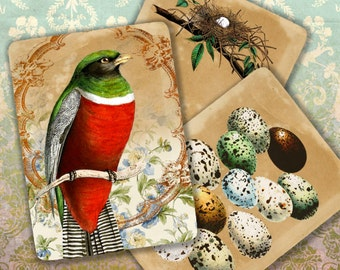 BIRDs EGGs  - Printable Download Digital Collage Sheet ChikUna Art Vintage Ephemera Paper Craft, Scrapbook