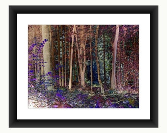 Enchanted Forest, fantasy forest,