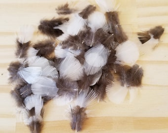 Pheasant Feathers Cruelty Free Humane Naturally Molted Real Feathers #c24