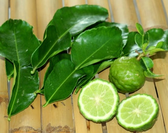 Thai Kaffir Lime (citrus hystrix) 10 seeds - Grow Kaffir Lime Leaves!