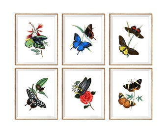 Butterfly art, butterfly artwork, butterfly art print, butterfly wall decor, vintage butterfly prints, Art Print SET of 6, 8x10 prints, 5x7