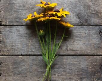 Rudbeckia, organic seeds, heirloom seeds, flower seeds, eco friendly, gardener gift, organic gardening, cottage garden, seed packet, garden