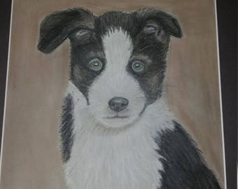Pastel chalk border collie puppy