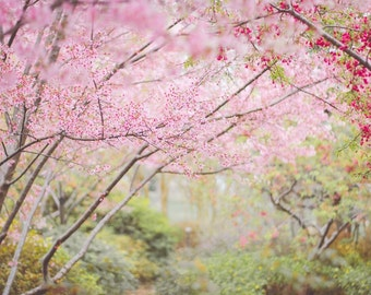 Flower Photograph Daisy Peach Nature Flower Print Coral