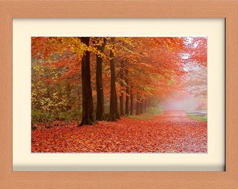Framed Photographic Fine Art Print. Autumn Woodlands. 3 Frames to pick from. FREE post UK