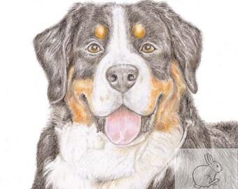 Loki the Bernese Mountain Dog  - Birthday Card
