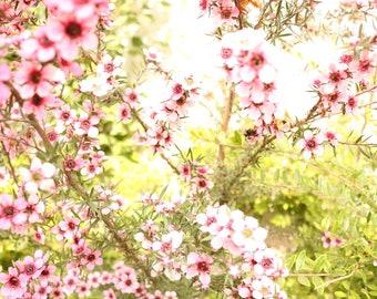 Pink Flowers Print