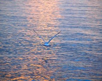 Landschaft, Vogel Photographie, zurückgeben, Jonathan Livingston Seagull, Möwe im Flug, Homeoffice-Hütte-Dekor, Natur-Fotografie, spirituelle