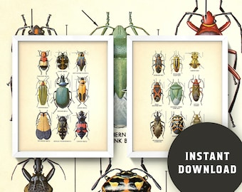 Vintage Beetles Print Set • 8x10 Wall Art • Instant Digital Download! • Insects • Bugs • Chart