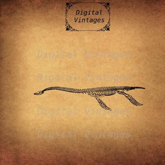 Plesiosauro fósiles esqueleto dinosaurio detallada ilustración ...