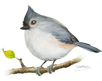 Tufted titmouse Painting - Watercolor Tufted titmouse - 5 x 7 print - Watercolor Painting, Archival Print, Home Decor, Nature Art