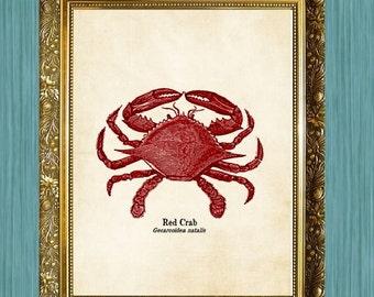 Red Crab Art Print Sea Life Art 8 x 10