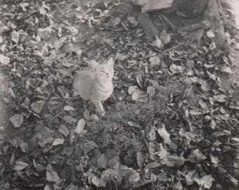 Kitty in the Grass- Original Vintage Photo