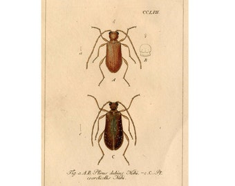 1837 BEETLES BUGS INSECT antique print original hand coloured engraving