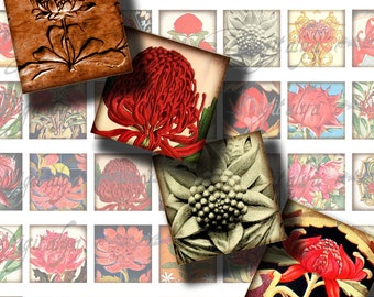WARATAHS -The Flower Emblem of New South Wales Australia -Digital Collage Sheet -  56 Squares 1x1 or 0.875 or scrabble