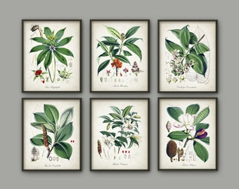 Green Plant Wall Decor Set Of 6 #2 - Vintage Botanical Posters - Green Plant Wall Decor - Botanical Art Illustration Giclee Picture - AB656
