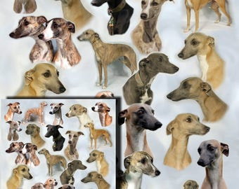 Whippet Dog Gift Wrapping Paper with matching Gift Card.
