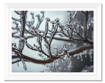 Iced branches, Frozen branches, Winter, Ice, Color Photo, Tree Branch, Macro Photograph Print, Wall Art, Instant Download