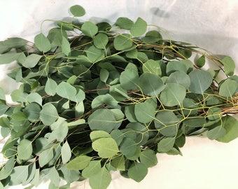 Fresh Eucalyptus, silver Dollar bouquet, Bulk Greenery, wedding bouquet, eucalyptus wedding, fresh silver dollar, wedding  garlands, wreath