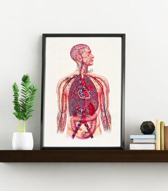 Doctors gift- Human Veins and arteries Circulatory System Anatomy print poster- Science prints gift Office wall SKA028WA4