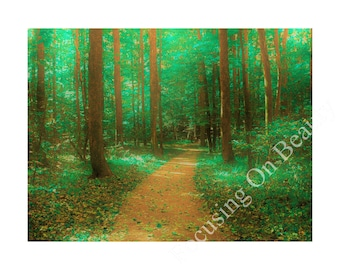 Download Forest Art / Download Art Print / Downloadable Posters / Nature Photography / Digital Forest Print / Digital Forest Art / Green Art