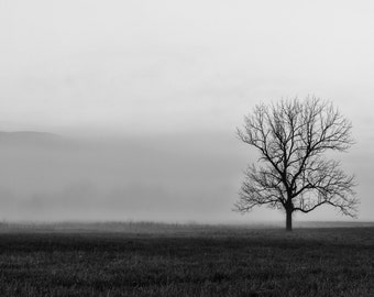 Cades Cove Sunrise in Great Smoky Mountains National Park, Tennessee Art, Black White, Landscape Photography, Rustic Wall Decor