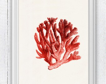 Red coral no.06 - Antique sealife Illustration - sea life print- Marine  sea life illustration A4 print SWC063