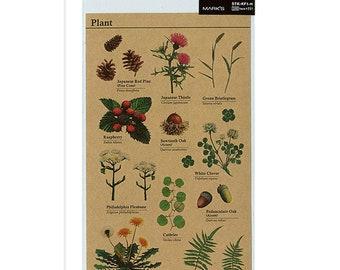 Plant Stickers - Dandelion Sticker - Fern Sticker - Acorn Stickers - Planner Stickers